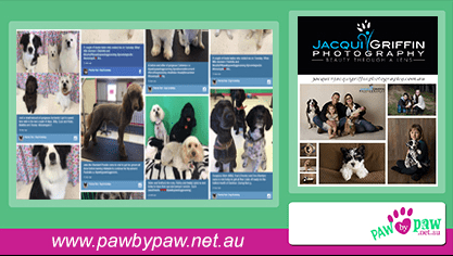 Paw By Paw Social Wall on Digital Signage